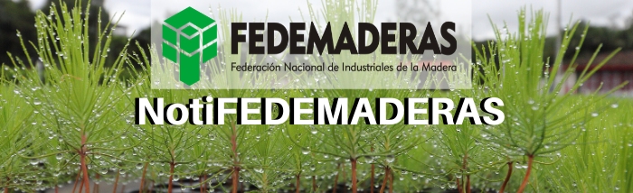 NotiFEDEMADERAS VF4